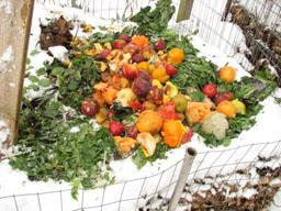 Compost pile in Schwenksville PA. Veggie10