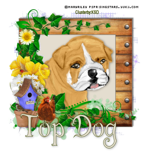 Top Dog 2016to10