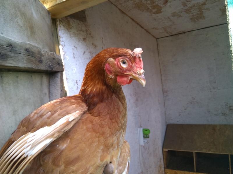Вопросы и консультации по лечению птицы - Страница 9 Img_2010