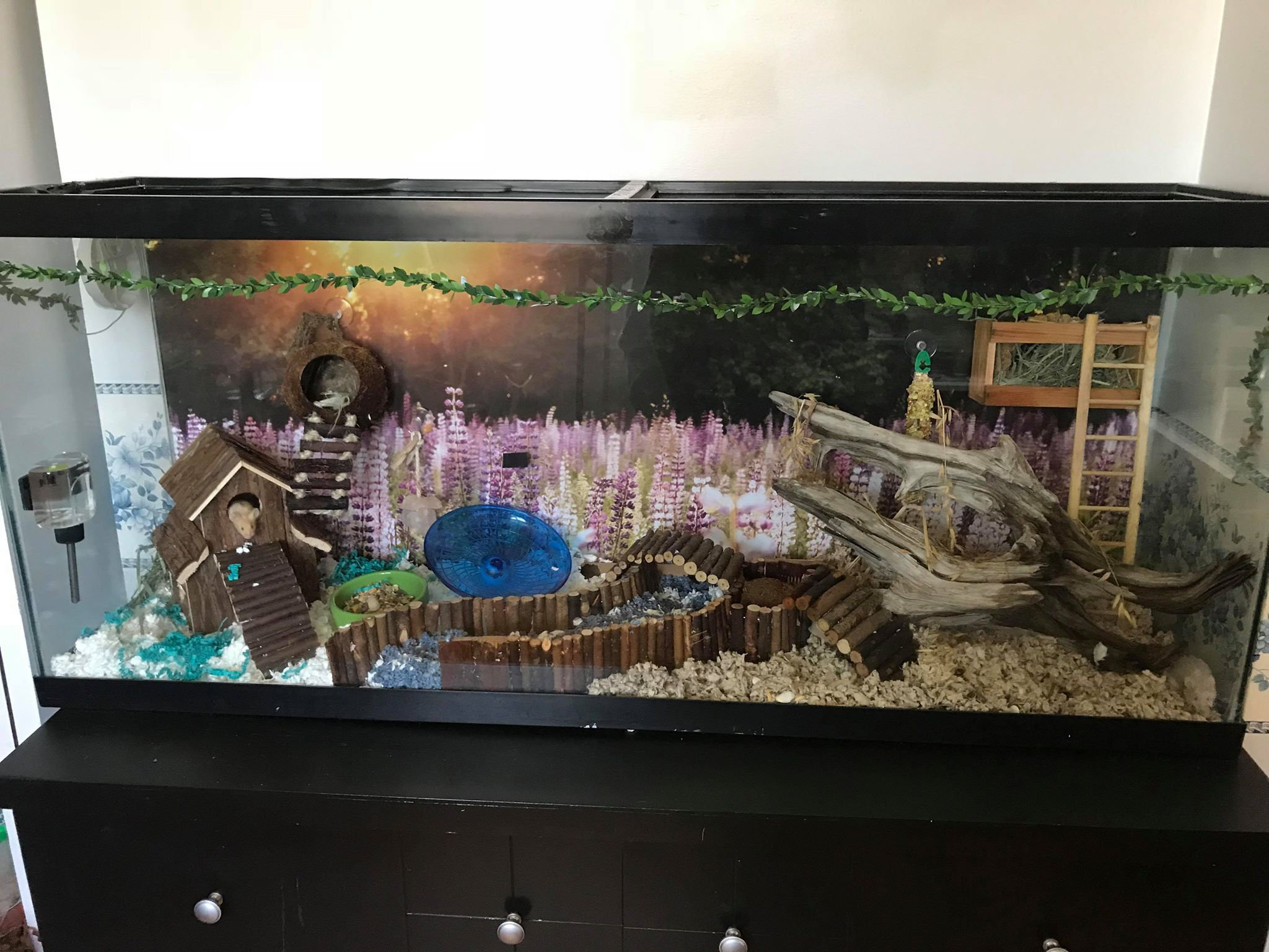 Our Mouse Tank 33613810