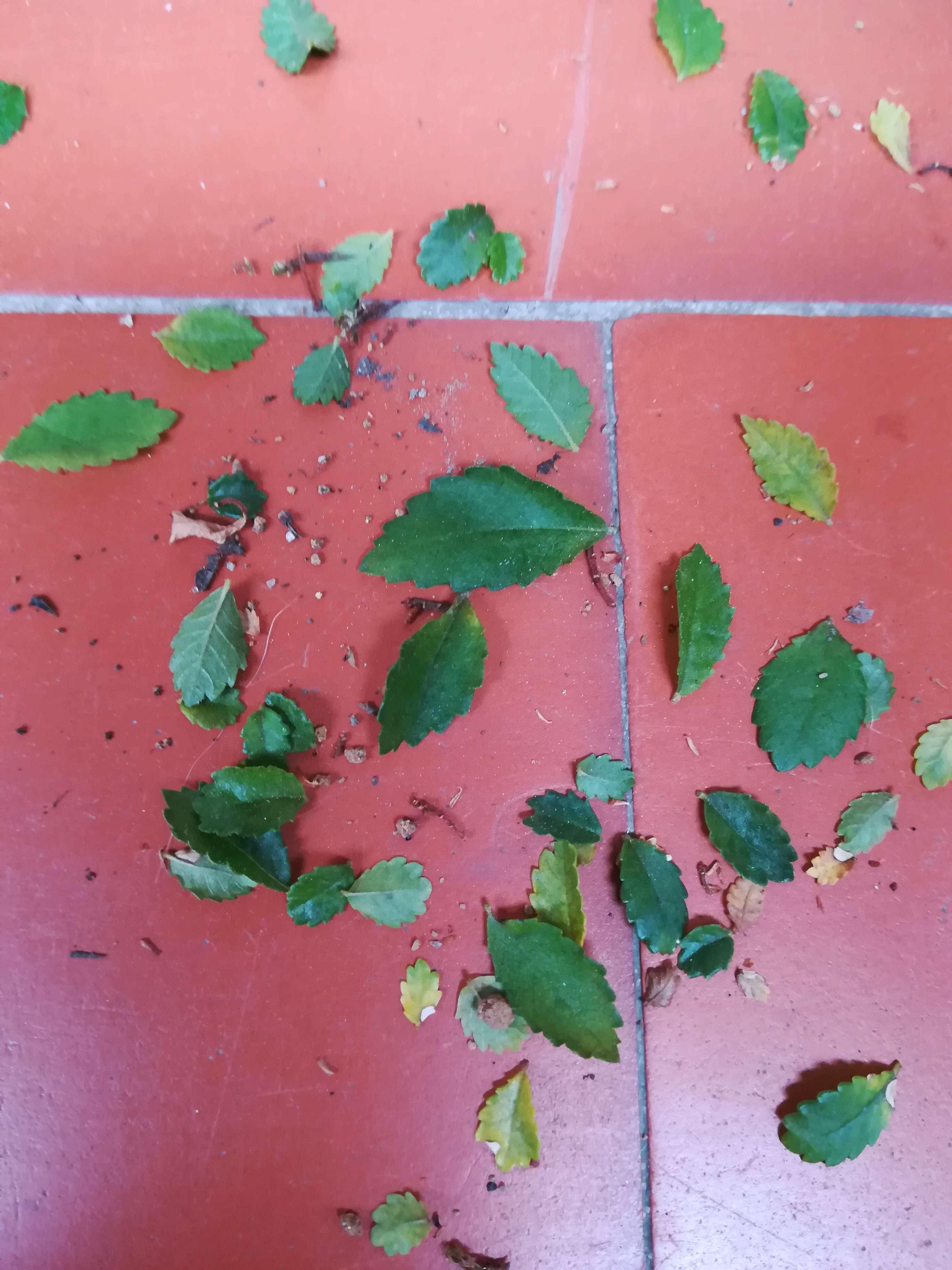 A mi olmo se le caen las hojas  Img_2014