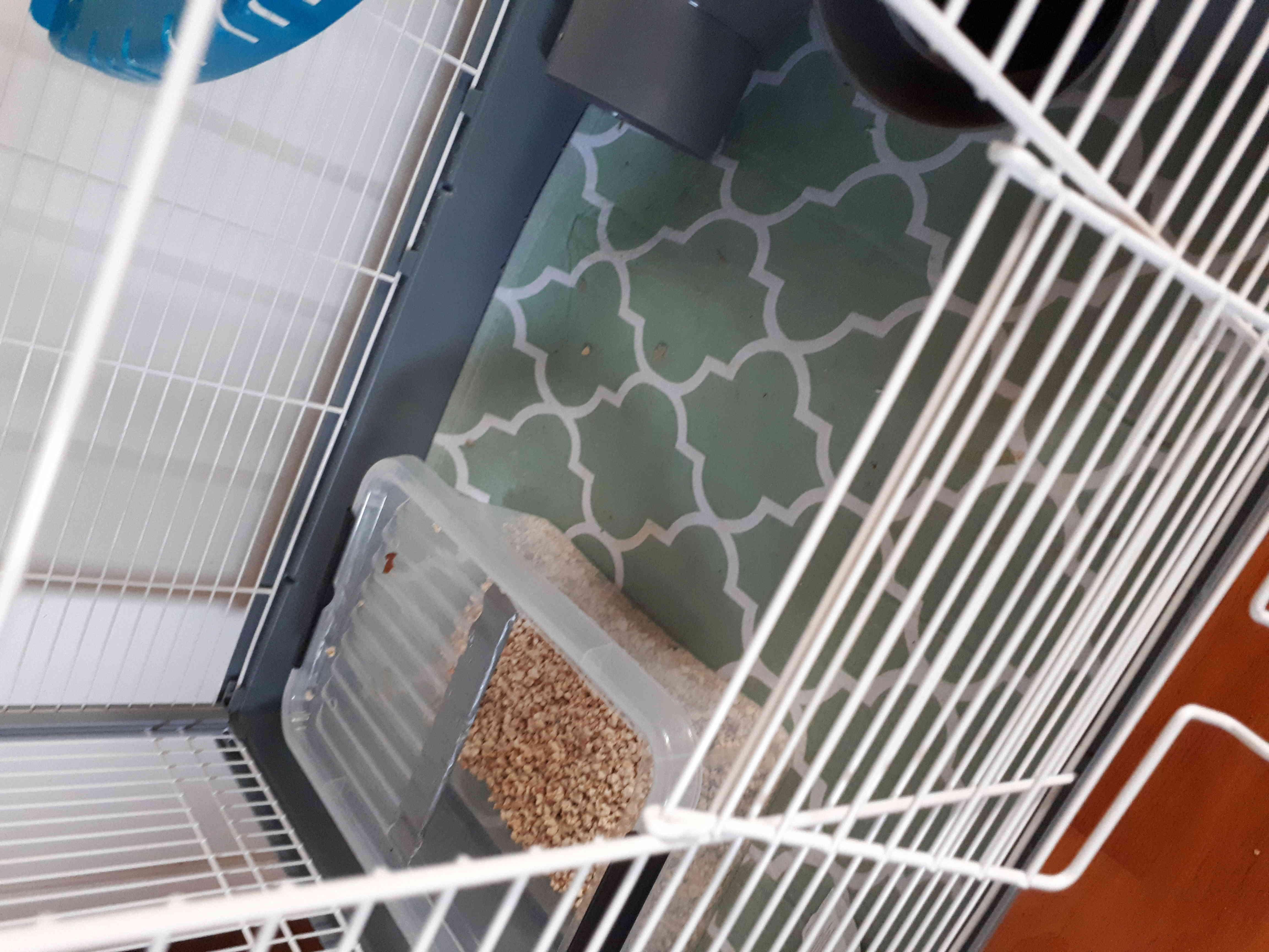 Tapis en fond de cage - Page 2 20180610