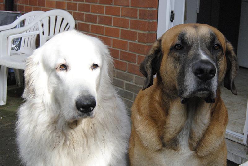nos amis les chiens - Page 8 510