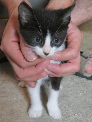 Besoin FA pour 3 chatons de 1.5 mois 33657116