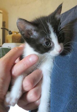 Besoin FA pour 3 chatons de 1.5 mois 33764311
