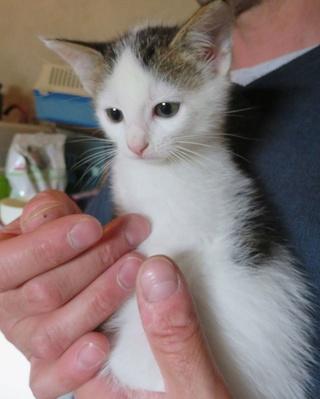 Besoin FA pour 3 chatons de 1.5 mois 33786411
