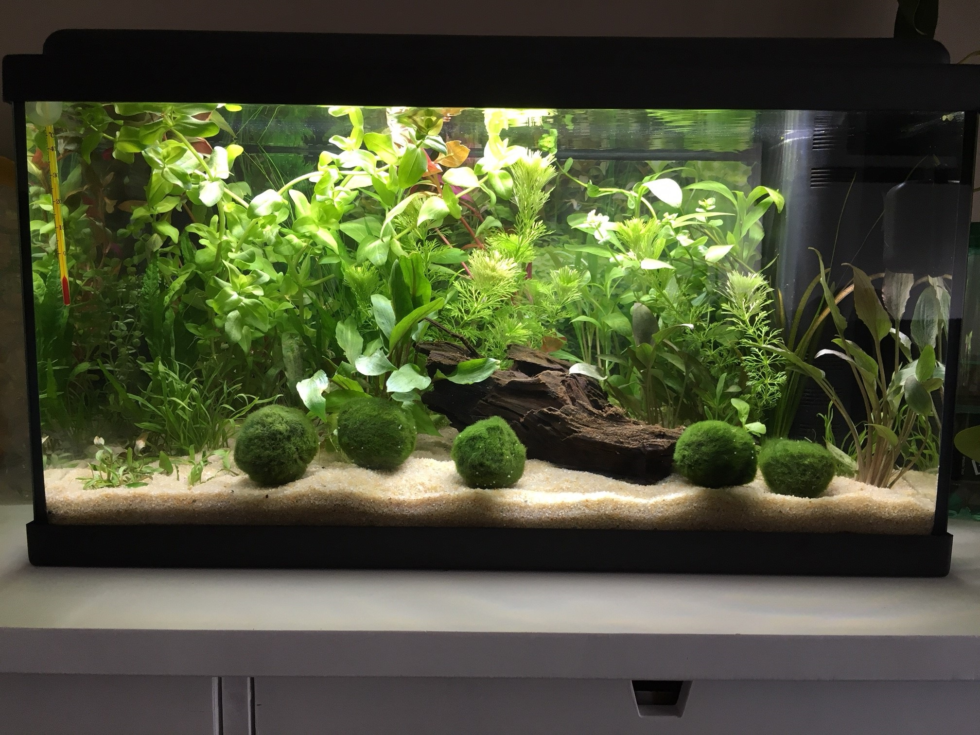 Mon premier aquarium : 60L planté - présentation. Photo_11