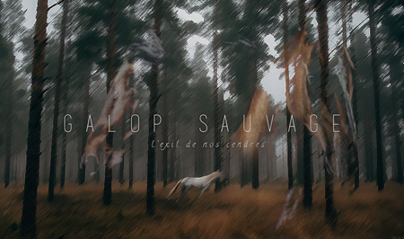 [TOP] Galop Sauvage Nouvel10