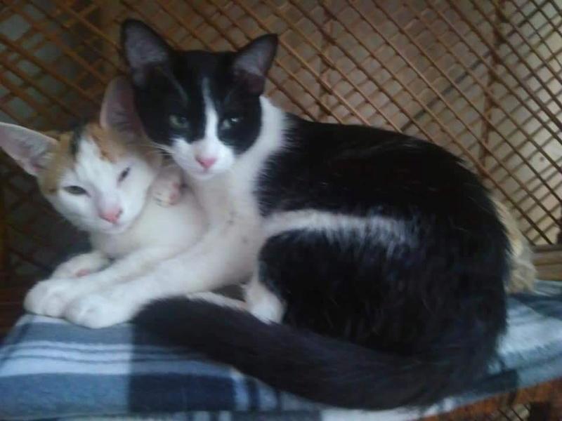ROSI - Noire et blanche - en FA 92 47490311