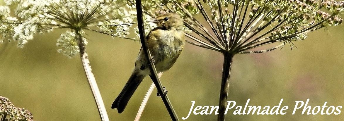 Jean Palmade Photos