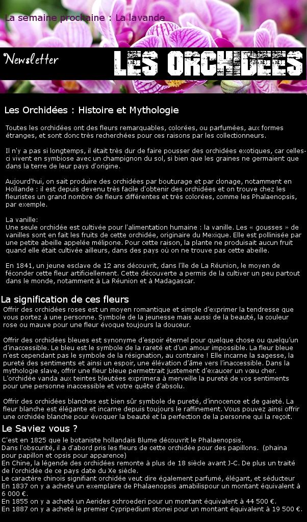 Newsletter 19 - Les fleurs : Les Orchidées Orchid11