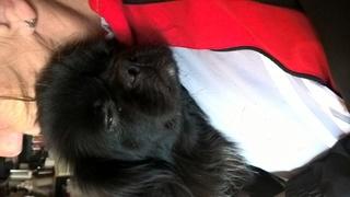Gusti Monor lebt jetzt glücklich in Deutschland Kepatm17