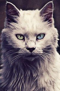 A king of beasts [Kitten search] Qllnk711