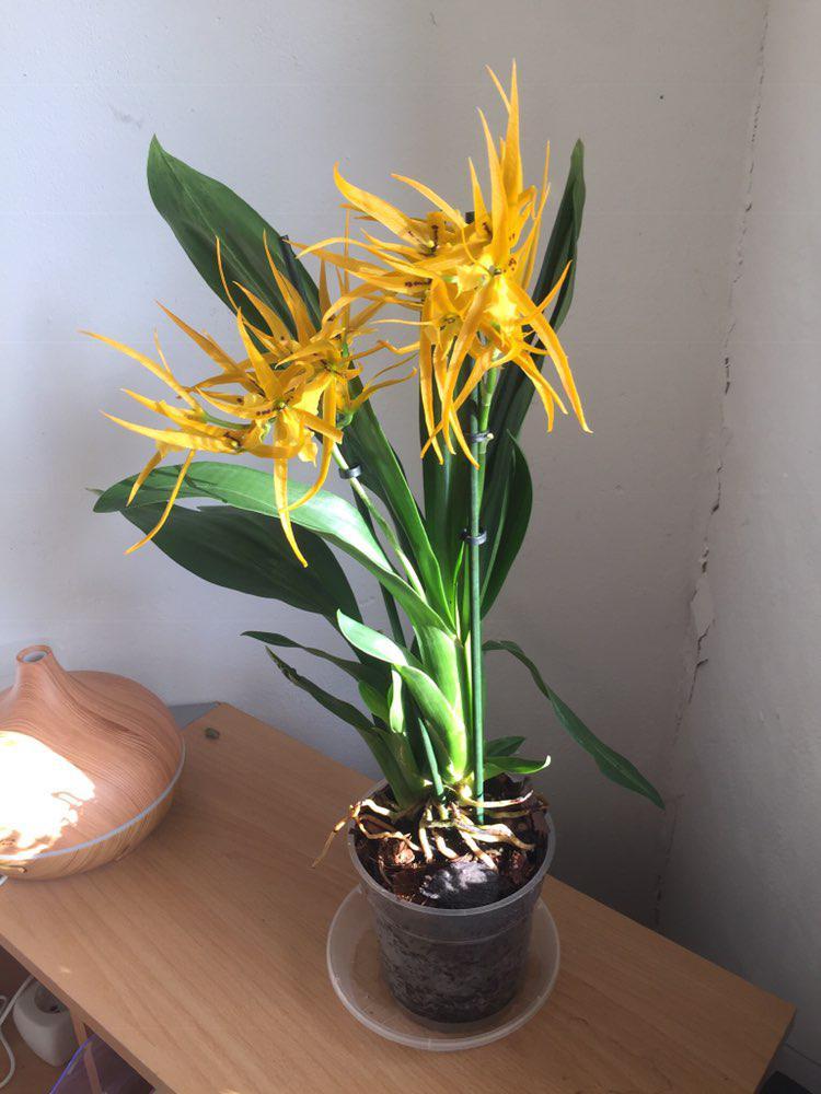 Orchideen 3 (fortlaufende Seiten 300 bis 400) - Seite 37 Photo_10