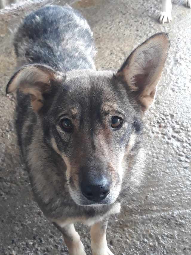 LUPI !! + de 3 ans de box !! - femelle , née environ en 2010, typée chien loup de sarloos, taille moyenne - REMEMBER ME LAND - Page 2 47057811