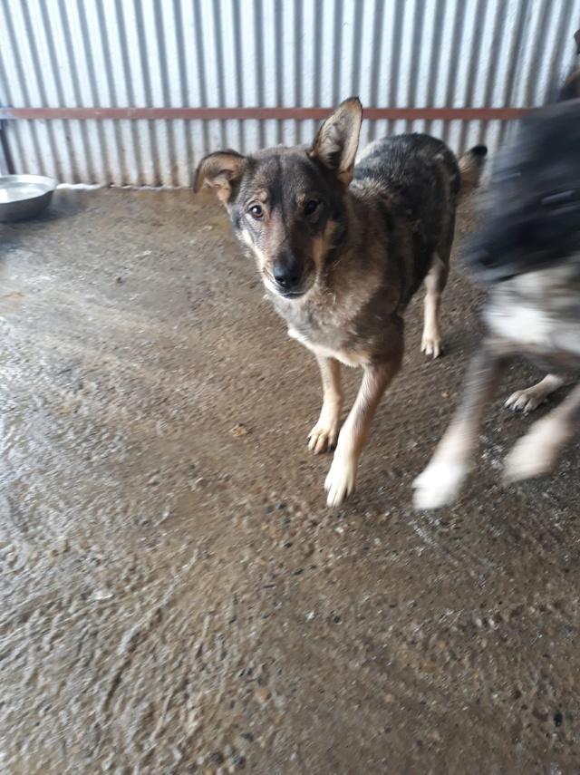 LUPI !! + de 3 ans de box !! - femelle , née environ en 2010, typée chien loup de sarloos, taille moyenne - REMEMBER ME LAND - Page 2 47119811