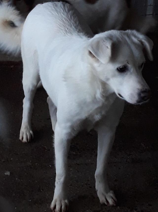 SNOW !! + de 3 ans de box !! femelle croisée blanche, née en 2013, taille moyenne - REMEMBER ME LAND - Page 3 47177010