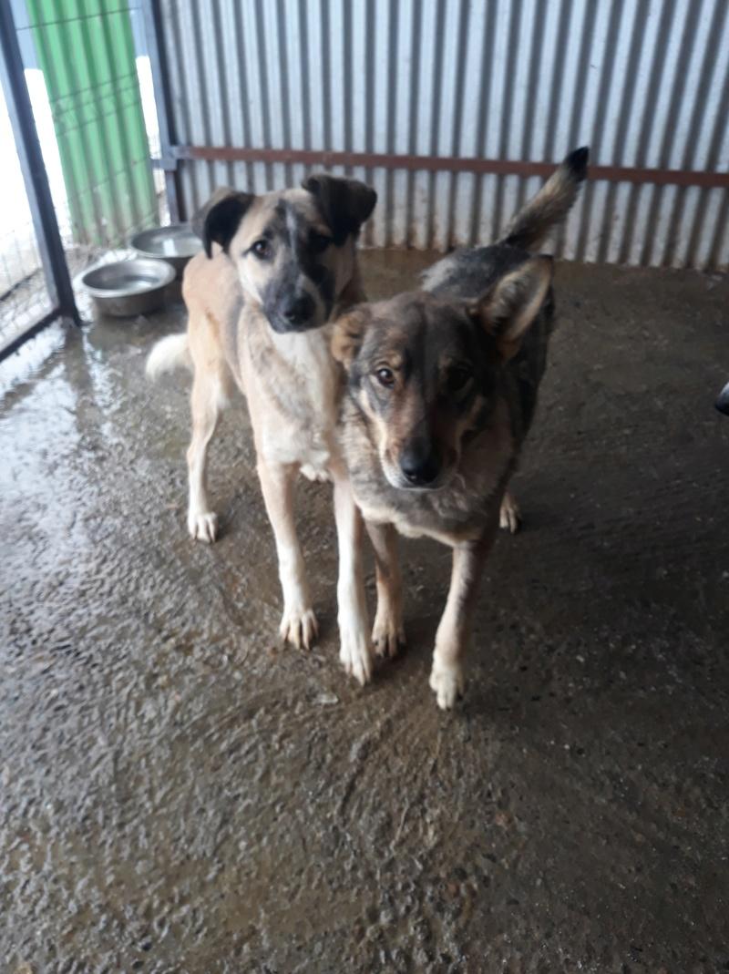 LUPI !! + de 3 ans de box !! - femelle , née environ en 2010, typée chien loup de sarloos, taille moyenne - REMEMBER ME LAND - Page 2 47242310