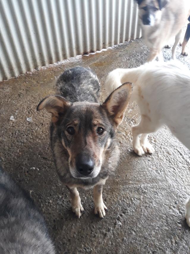 LUPI !! + de 3 ans de box !! - femelle , née environ en 2010, typée chien loup de sarloos, taille moyenne - REMEMBER ME LAND - Page 2 47375510