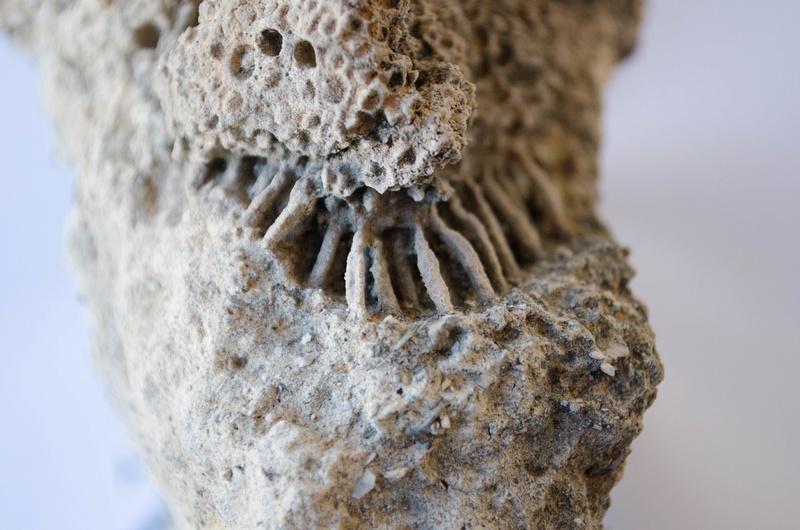 Ciertamente  no se lo que puede ser Fosili10