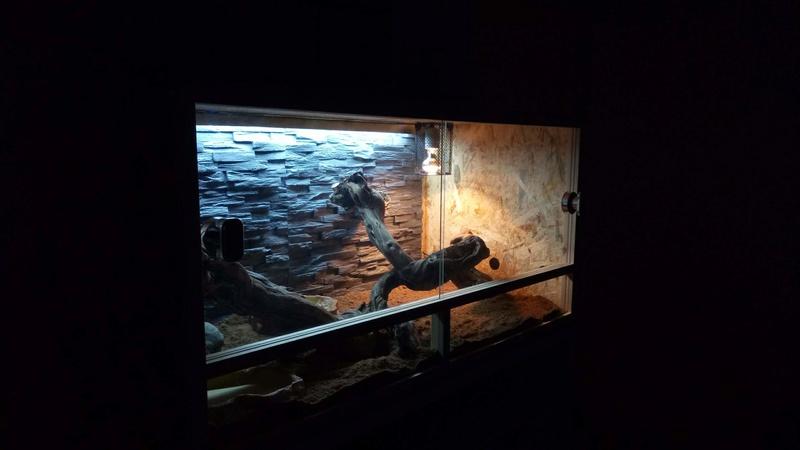 Terrarium pour mon El Pogo P8102910