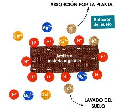 Bajar el pH al agua de riego O_arci11
