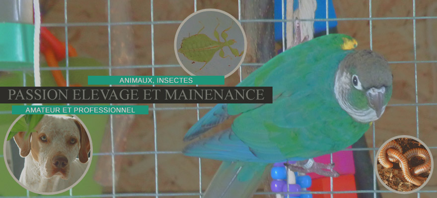 Passion élevage & maintenance