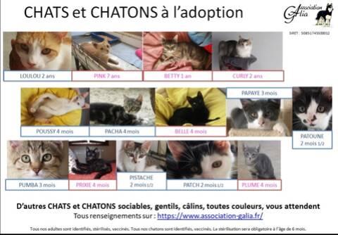 Annonces Pour Adoption Des Chats Et Chatons