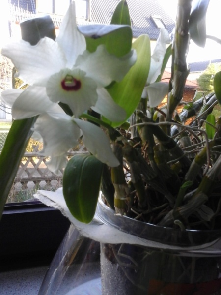 Orchideen 3 (fortlaufende Seiten 300 bis 400) - Seite 57 20190311