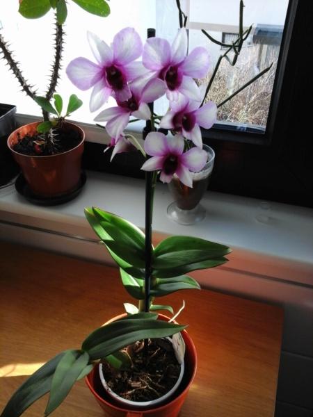 Orchideen 3 (fortlaufende Seiten 300 bis 400) - Seite 57 20190312