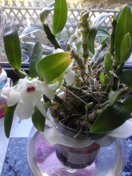 Orchideen 3 (fortlaufende Seiten 300 bis 400) - Seite 57 20190313
