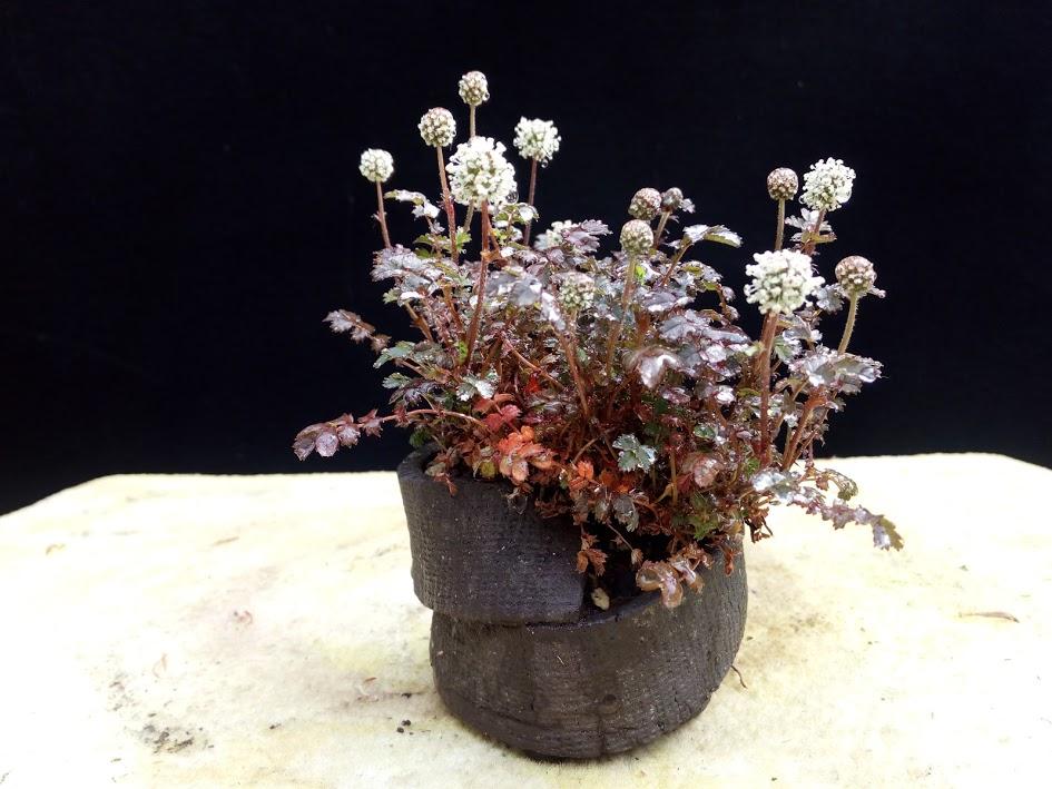Les plantes d'accompagnement de MB Img_2064
