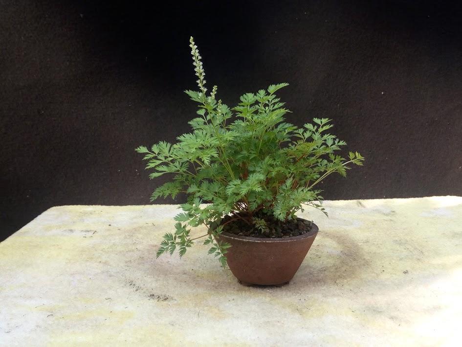 Les plantes d'accompagnement de MB Img_2073