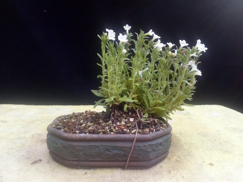 Les plantes d'accompagnement de MB Img_2074