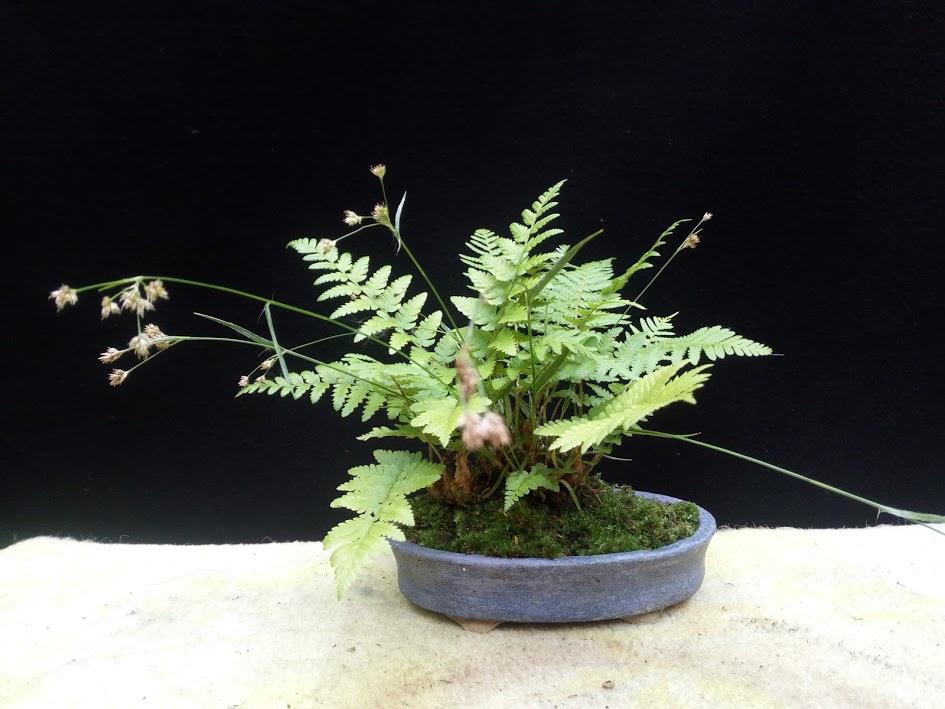 Les plantes d'accompagnement de MB Img_2079