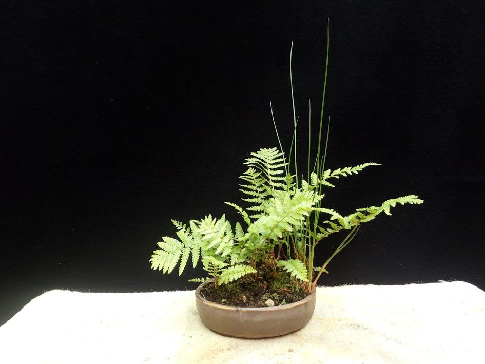 Les plantes d'accompagnement de MB Img_2080