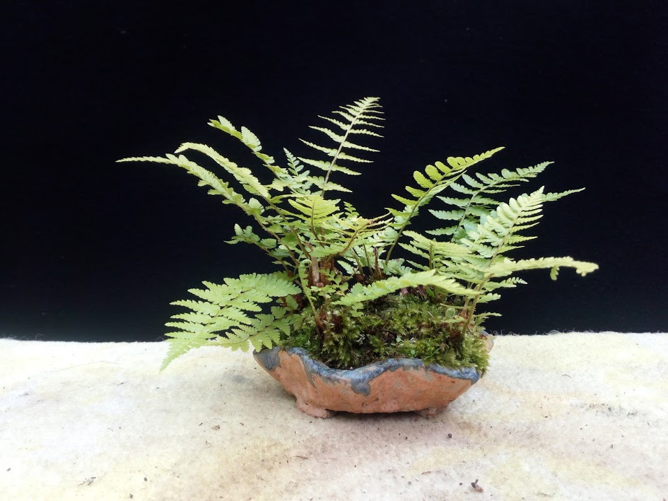 Les plantes d'accompagnement de MB Img_2082