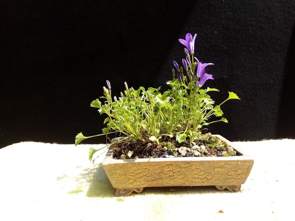 Les plantes d'accompagnement de MB Img_2093
