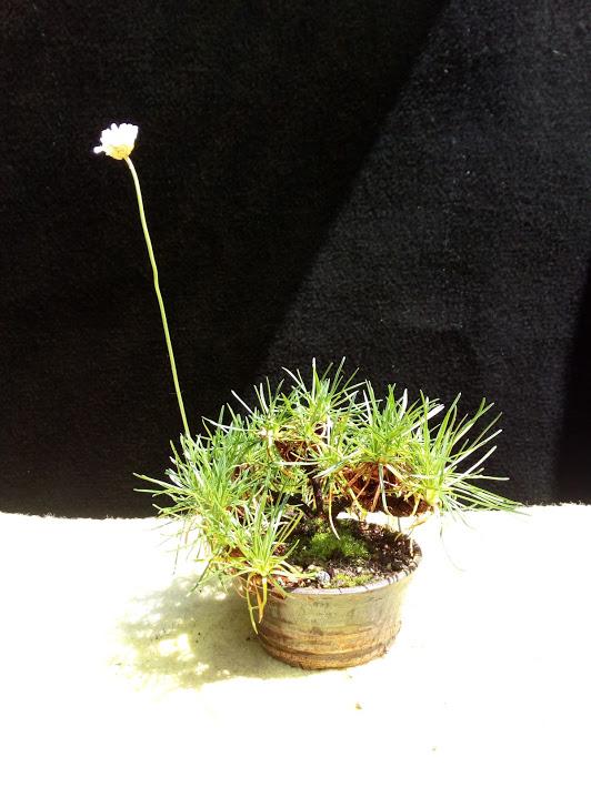 Les plantes d'accompagnement de MB Img_2095