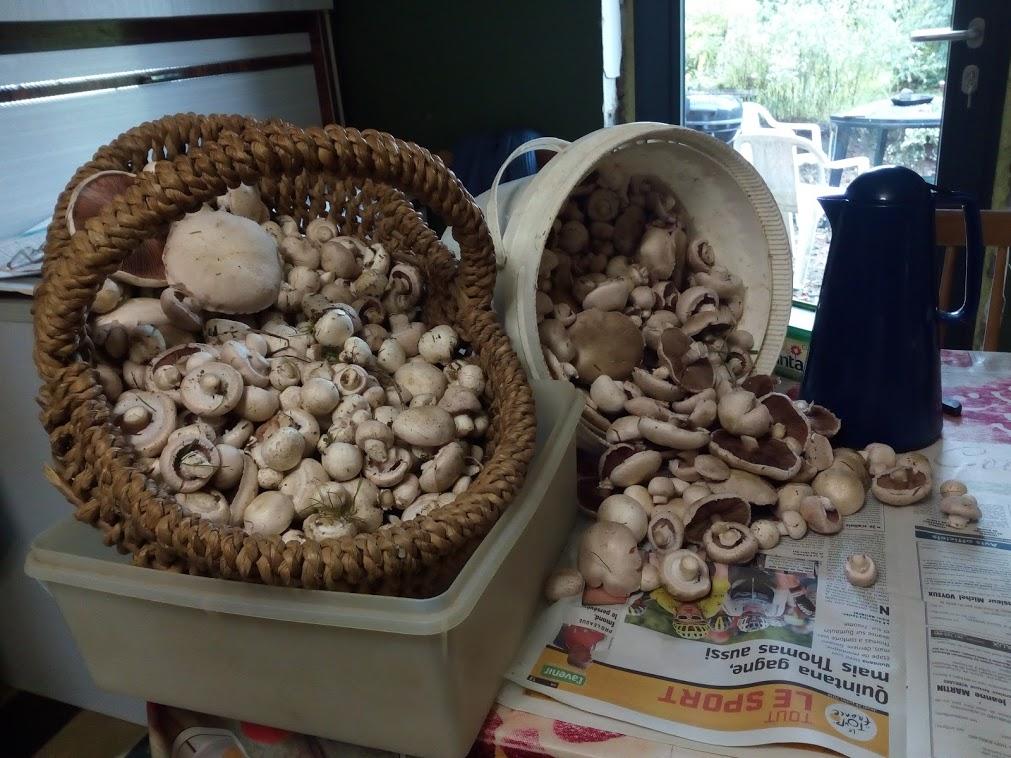 C' est la saison des champignons Img_2126