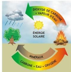 La Biomasse est-elle polluante ? Durable ? Utile ? Fig210