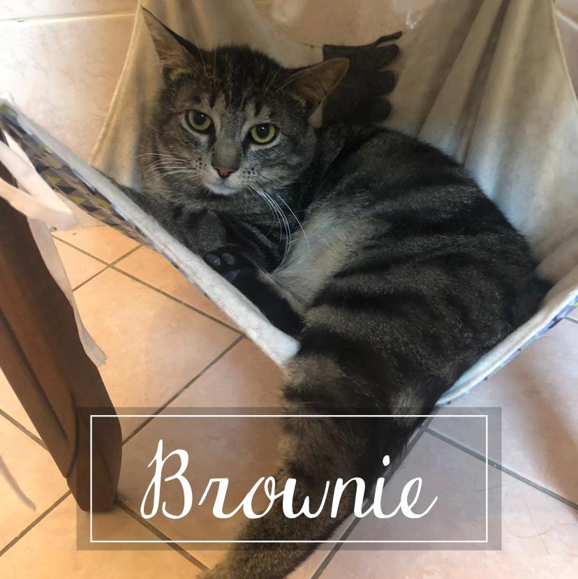 BROWNIE  Browni10