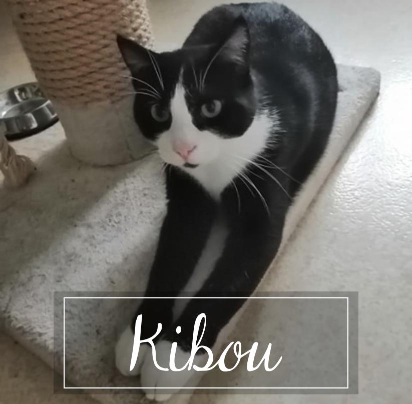 KIBOU   - Page 2 Kibou110