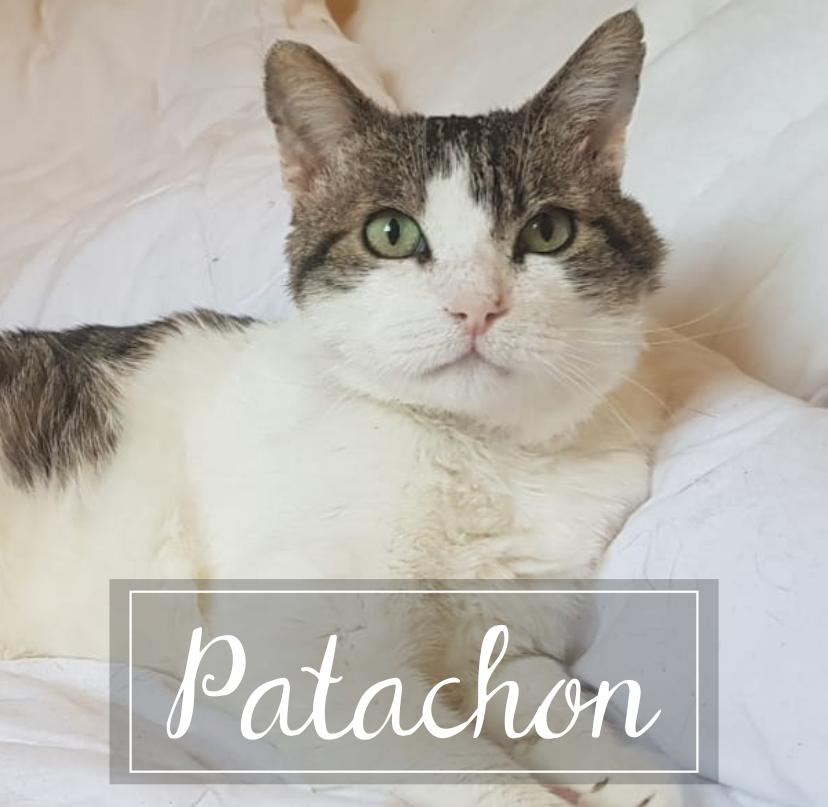 PATACHON Rect8110