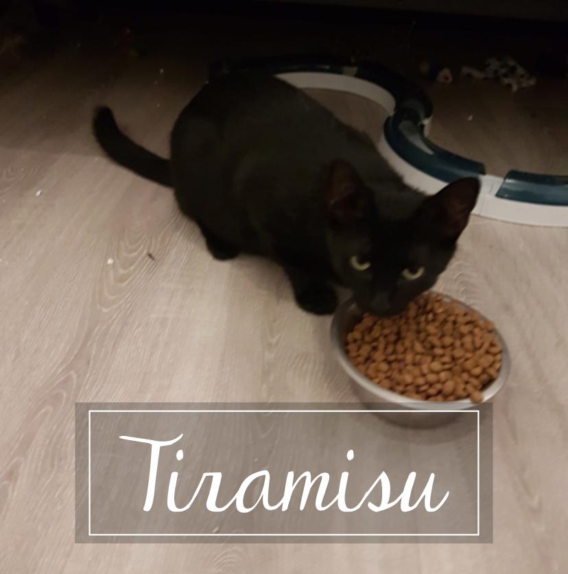 TIRAMISU Tirami10