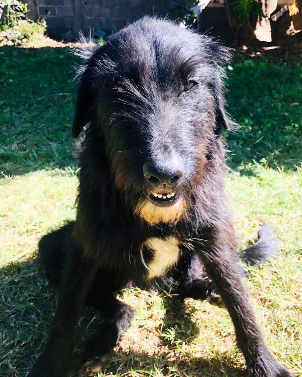 CHOCO, adorable chienne de 2 ans et demi - 28 kg - marrainée par Harfeng - Réservée par Anne 11671210