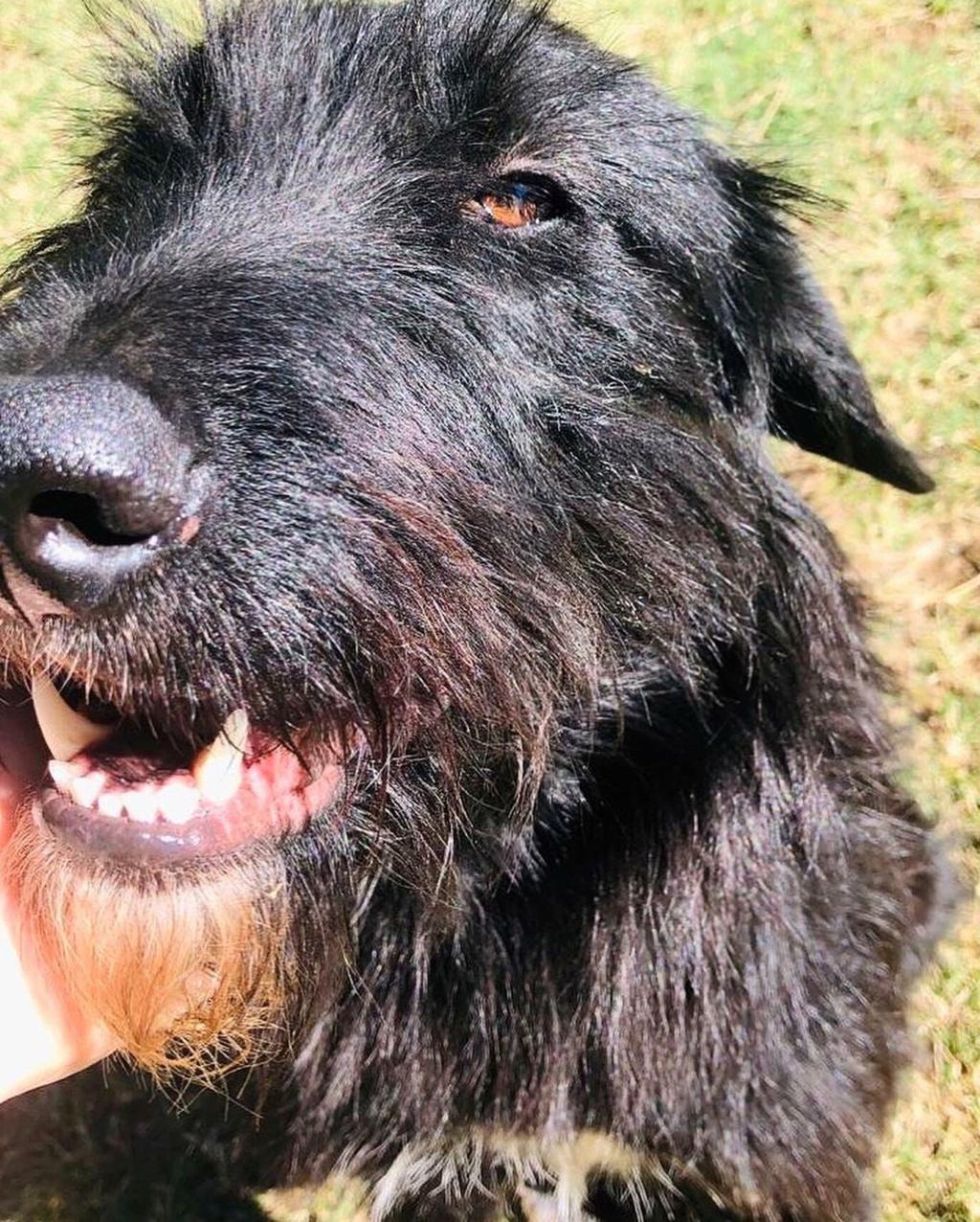 CHOCO, adorable chienne de 2 ans et demi - 28 kg - marrainée par Harfeng - Réservée par Anne 11674210