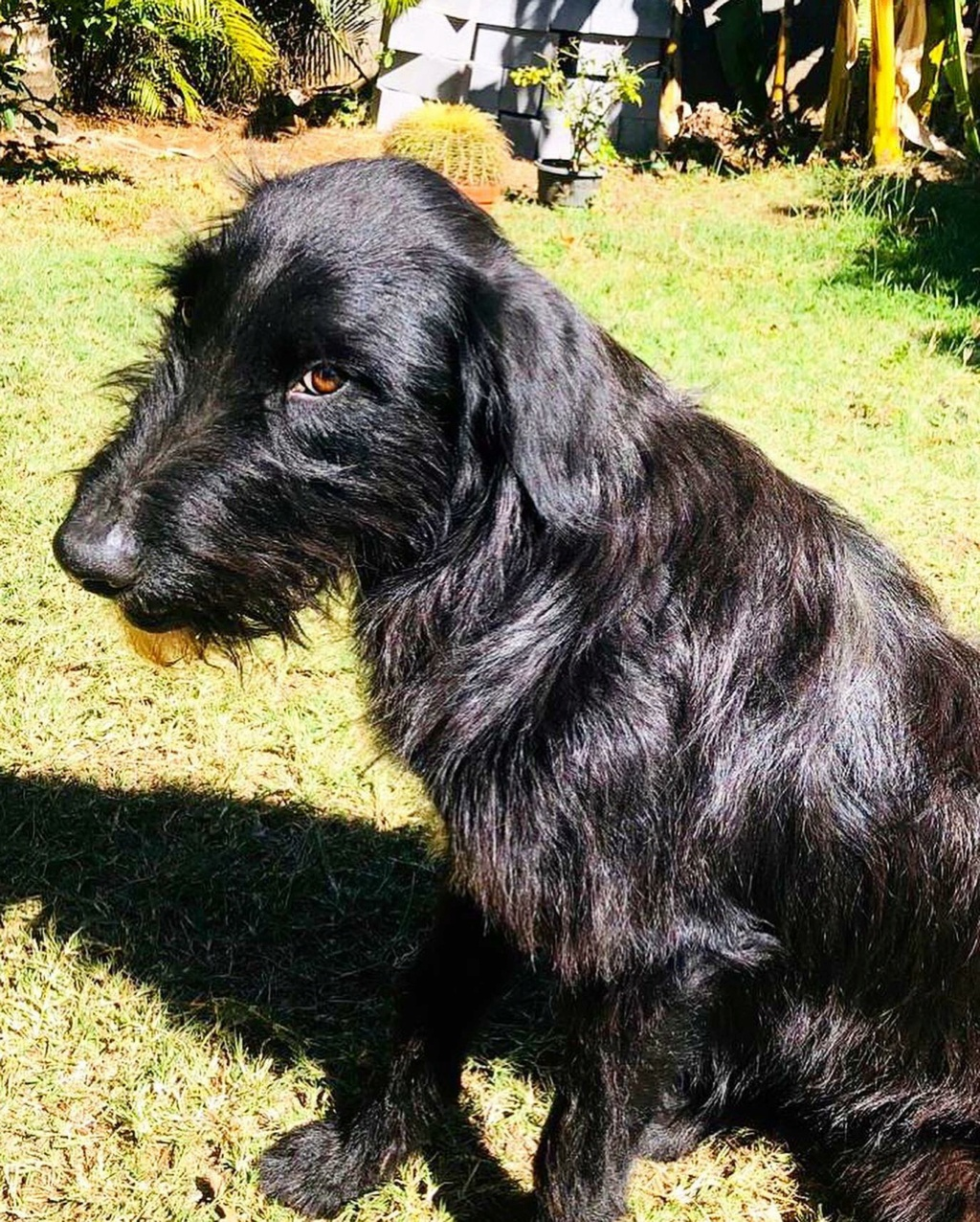 CHOCO, adorable chienne de 2 ans et demi - 28 kg - marrainée par Harfeng - Réservée par Anne 11687010