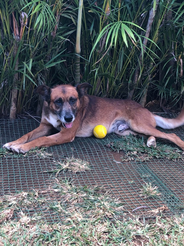 PAGNOL, chien de 6 ans environ, 20 kg 11741010