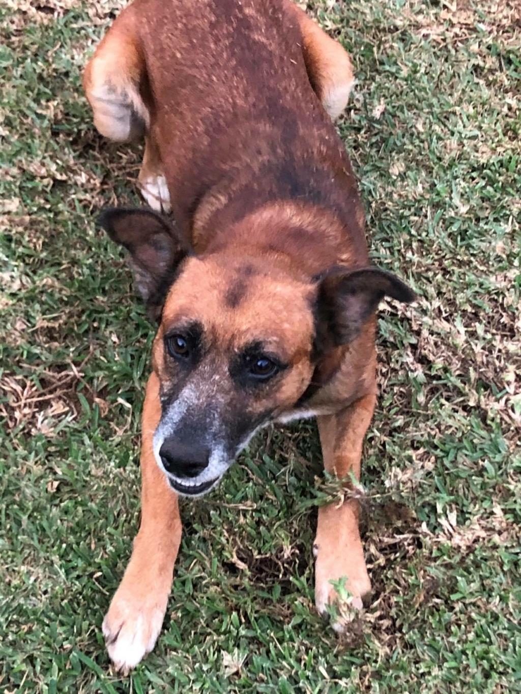PAGNOL, chien de 6 ans environ, 20 kg 11925310